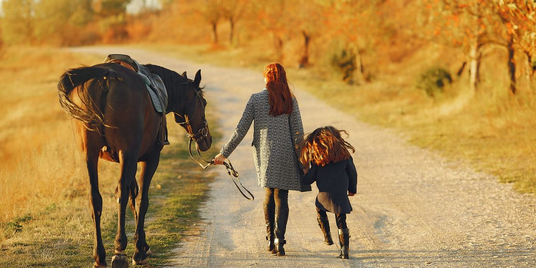 Visual Guide to Equine Therapy